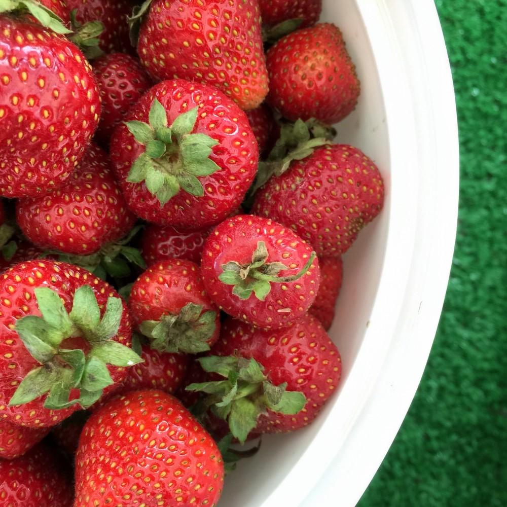 June 18 Map & Strawberries!