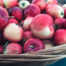 Street Beets Sept. 12th, 2015: Market Map, 40-Year Vendor and Sharon's Pies & More
