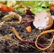 🚨New Vendor Alert!🚨 « » Turn those kitchen scraps into nutrient-rich food for plants. Bring your compostables to market and leave them in good hands with @lkcompost. They offer a service which will now be conveniently collecting these compostables