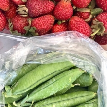 Well this is exciting! Saskatchewan grown fresh strawberries and peas at the market today! Find Southland Colony at the north west side of the Plaza! « » OUTDOOR FARMERS' MARKETS 2018 Wednesdays & Saturdays • May 5 to October 6 9am-1pm • City Squa