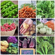 Now is the time to find the absolute best Saskatchewan grown produce around at The Regina Farmers' Market! Tomorrow we've got: « » PEAS BROCCOLI CAULIFLOWER KOHLRABI CABBAGE CARROTS POTATOES BEETS LETTUCE SPINACH TOMATOES CUCUMBERS EGGPLANTS HERBS EDIBL