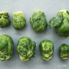 August 31 Map & Brussels Sprouts!
