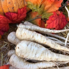 The hard frosts of fall mean that we have to say goodbye to some of our Saskatchewan local food bounty. But some seasonal treats are just now coming into their own! Here's a pro parsnip tip from RFM farmer Pam Miller, of @millersbygonefarm (find her on