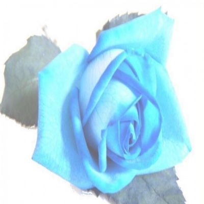 Blue Rose Gluten Free