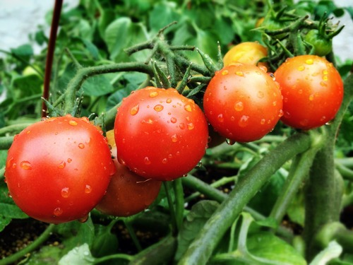 Street Beets May 24th, 2014: Fairs, Fighting, and New Vendors!