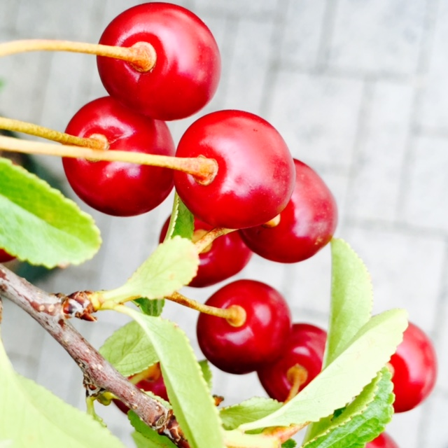 Street Beets July 21st, 2015: Cherry Trees, Cold Brew Coffee, and Vendor Map! - Image 1