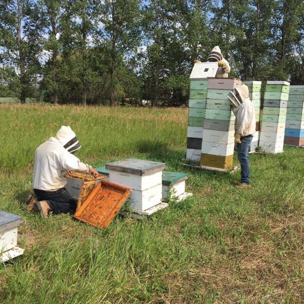 Vendor Spotlight: Keller's Bee Happy Honey