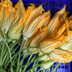 Street Beets August 8th, 2015: Squash Blossoms, Corn and Map during Folk Fest