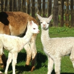 This Week at RFM: Saturday, Feb. 15