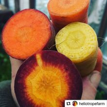 Super stoked to have some beautiful organically grown vegetables at our #HolidayNightMarket tomorrow night (Nov 29, 5-9pm)! REMINDER that the location has changed to 445 14th Ave!< > #farmersmarket #knowyourfarmer #holidays #holidayshopping #yqrevents #y
